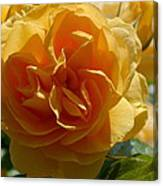 Ginny's Rose In The Sun Canvas Print