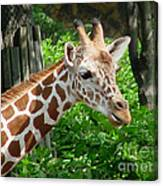 Giraffe-09034 Canvas Print