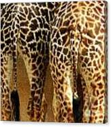 Giraffe Butts 1 Canvas Print