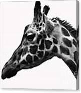 Giraffe Head Shot Canvas Print