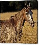 Giraffe Horse Canvas Print
