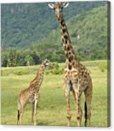 Giraffe Mother And Calftanzania Canvas Print
