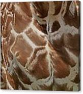 Giraffe Patterns Canvas Print