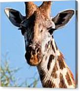 Giraffe Portrait Close-up. Safari In Serengeti. Canvas Print