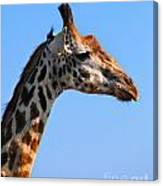 Giraffe Portrait Close-up. Safari In Serengeti. Tanzania Canvas Print