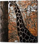 Giraffe Posing Canvas Print