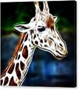 Giraffe Zoo Art Canvas Print