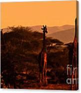 Giraffes At Sundown Canvas Print