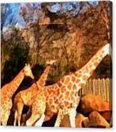 Giraffes At The Zoo Canvas Print