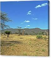 Giraffes In Samburu National Reserve Canvas Print