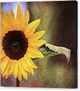 Girasole Canvas Print