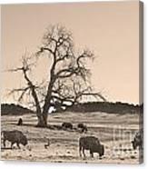 Give Me A Home Where The Buffalo Roam Sepia Canvas Print