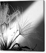 Give Me Light... Give Me Life Canvas Print