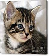 Gizmo The Kitten Canvas Print