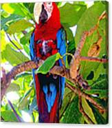 Gizmo The Macaw Canvas Print