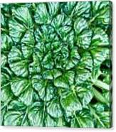 Glabrous Leaves Canvas Print