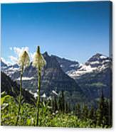 Glacier Grass Canvas Print