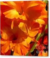 Gladiola Coral Canvas Print