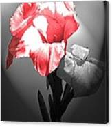 Gladiola With Heart Canvas Print