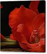 Gladiolus II Intimate Canvas Print