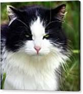 Glaring Cat Canvas Print