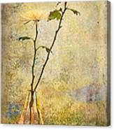 Glass Vase With Spider Mums Canvas Print