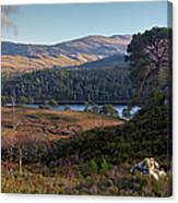 Glen Affric Panorama II Canvas Print