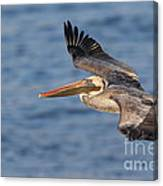 gliding by Pelican Canvas Print