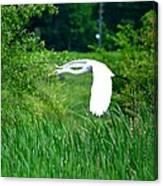 Gliding Egret Canvas Print