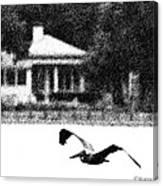 The Gliding Pelican Canvas Print