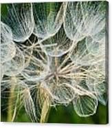 Glittering In The Grass Canvas Print