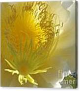 Glorious Dragon Fruit In Full Bloom Canvas Print