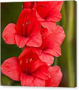 Glorious Glads Canvas Print