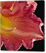 Glorious Lily Canvas Print