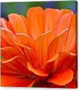 Glorious Orange  Canvas Print