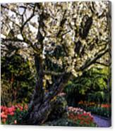 Glorious Spring Blooming, Stanley Park, Vancouver, British Columbia, Canada Canvas Print