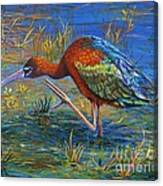 Glossy Ibis Canvas Print