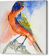 Da188 Glow Of The Painted Bunting Daniel Adams Canvas Print