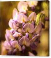 Wisteria Afterglow Canvas Print