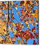 Glowing Autumn Canvas Print