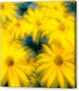 Glowing Blossoms Black Eyed Susans Canvas Print