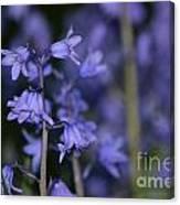 Glowing Blue Bells Canvas Print