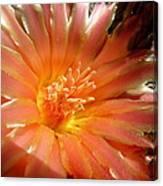 Glowing Cactus Flower Canvas Print