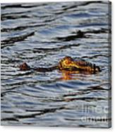 Glowing Gator Canvas Print