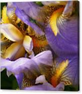 Glowing Iris' Canvas Print