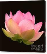 Glowing Lotus Square Frame Canvas Print