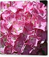 Glowing Pink Hydrangea Canvas Print