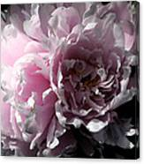 Glowing Pink Peony Canvas Print