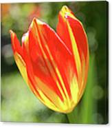 Glowing Tulip Canvas Print