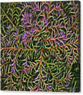 Glowing Vines Canvas Print